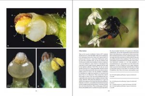 "sample pages ""The flower of the European orchid - Form and function"" 164-165"