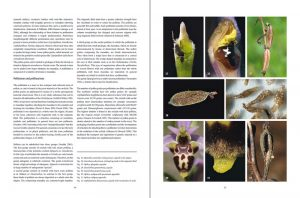 "sample pages ""The flower of the European orchid - Form and function"" 26-27"