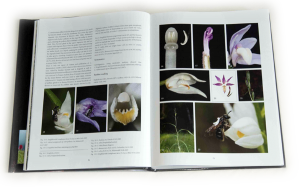 "sample pages ""The flower of the European orchid - Form and function"" 62-63"