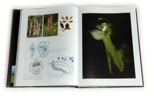 "sample pages ""The flower of the European orchid - Form and function"" 80-81"