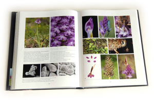 "sample pages ""The flower of the European orchid - Form and function"" 208-209"