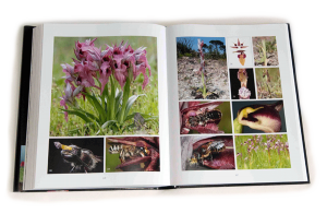 "sample pages ""The flower of the European orchid - Form and function"" 326-327"